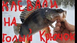 зимняя рыбалка на окуня рыбалка на Кольском