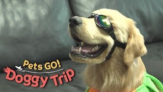 Let's Wear This and See How You Look Like [Pets GO! Doggy Trip Ep 1]