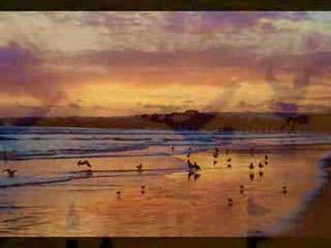 Selfish - Sunset Daze