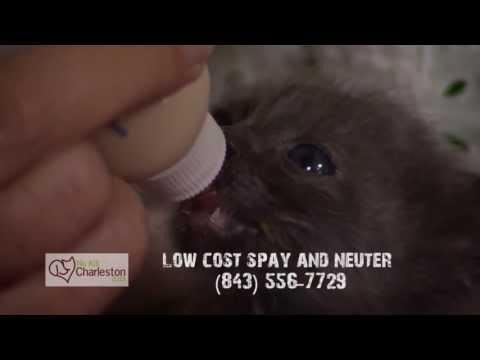Free Or Low Fee Spay & Neuter At Charleston Animal Society