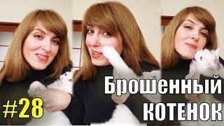 Брошенный котенок #28 КОТЕНОК КУСАЕТСЯ И ЦАРАПАЕТСЯ Турецкая ангора - спасенный уличный котенок!