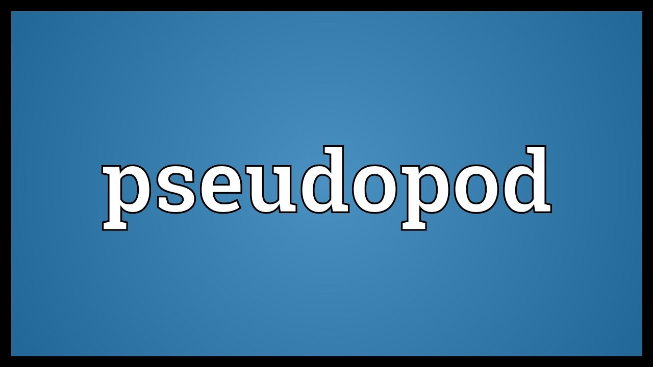 Pseudopod Meaning