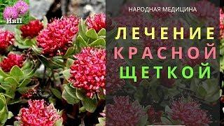 настойка травы красная щетка применение, рецепты, свойства и противопоказания