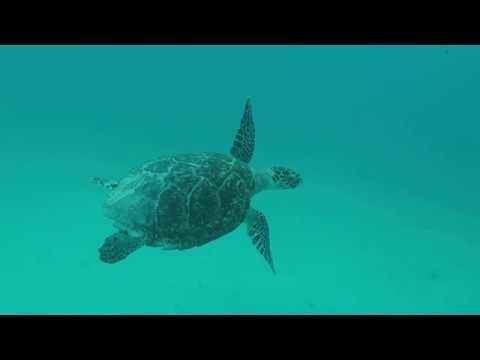 Barbados Turtle Shipwreck and Beach Excursion Royal Caribbean by Ocean Adventures