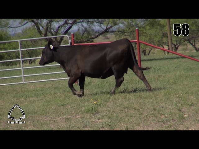 Pearcy Angus Ranch Lot 58