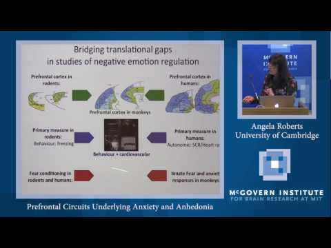 Stanley Center and Poitras Center Joint Translational Neuroscience Seminar: Angela Roberts