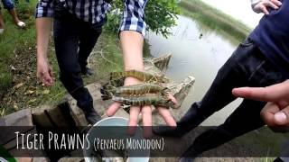 Direct Seafoods: Prawn Farming & Factory Process in Vietnam