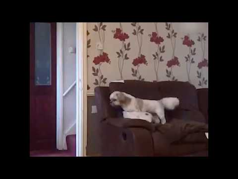 Dog reacts to magic trick !! WHAT SHE JUST DISAPPEAR *FUNNY*