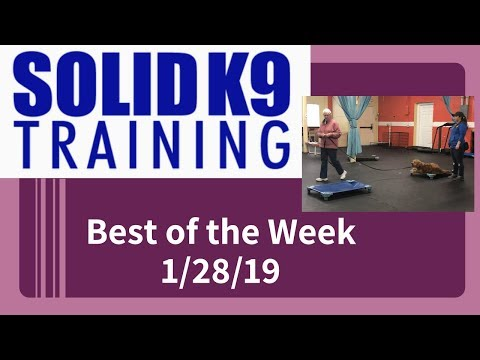 Solid K9 Training Center Best of the Week 1/28/19