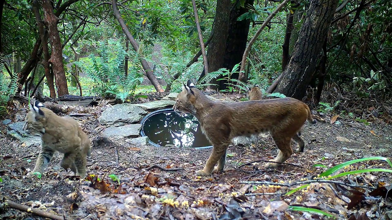 Water hole wildlife behind our home!