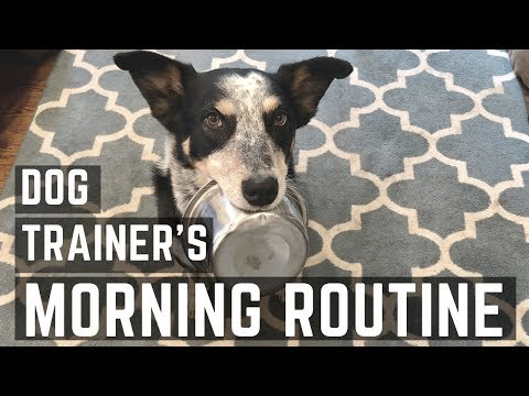 Morning Routine with my Dogs
