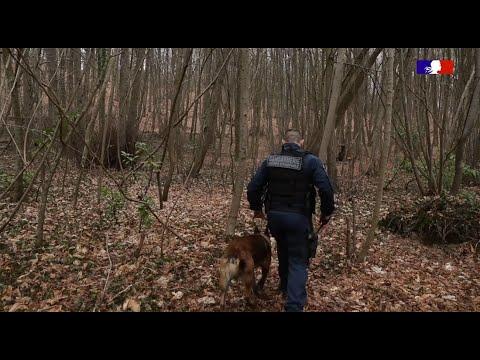 #ChevauxMutiles : Dispositif de surveillance de la gendarmerie du Morbihan