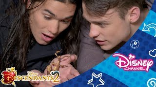 Disney Channel Dares | Thomas and Booboo | Spider Challenge 🕷 | Official Disney Channel Africa