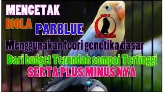 Video CARA MENCETAK BIOLA PARBLUE dengan Budget rendah / How To Breed Parblue Opaline #TipsBreeding download MP3, 3GP, MP4, WEBM, AVI, FLV Juli 2018