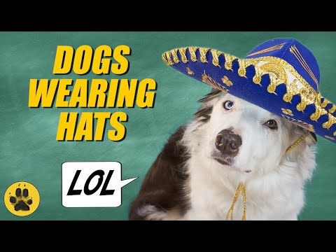 Dogs Wearing Hats  -  Hilarious!