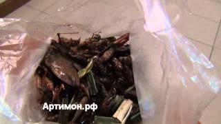 Тайланд. Паттайя. Видео - Ужин из насекомых за 70 бат.(Личинки, кузнечики, тараканы, сверчки - всё вкусно. всё питательно. Полная сборка: тайланд видео и паттайя..., 2013-02-11T20:08:28.000Z)