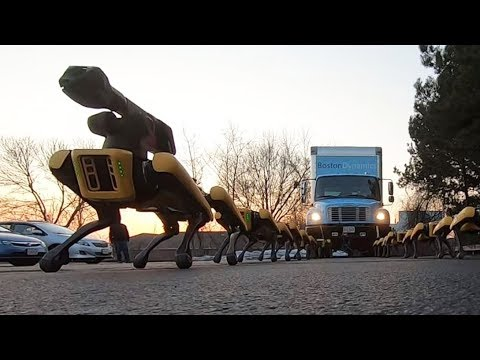 Spotmini Robots Hauling A Truck – This Ai Robot Dog Coming Soon In Mass Productions