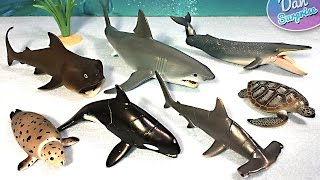 15 sea animals surprise toys 3d puzzles great white shark whale manta ray beluga turtle