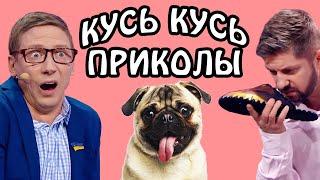 КУСЬ КУСЬ приколы 2021 Подборка смешных видео приколов про собак ТОП приколы с животными 2021