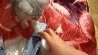 Покупки из зоомагазина для моего котёнка