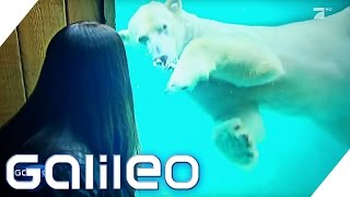 Einfach tierisch! Zu Besuch im Zoohotel | Galileo | ProSieben