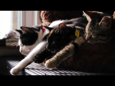 We Are Their Voice - North Toronto Cat Rescue Documentary