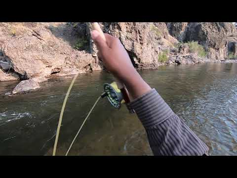 Fly Fishing In The California Sierra Mountains - Healthy Rainbow Trout