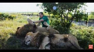 В обнимку с любимыми львами Чуком и Геком !