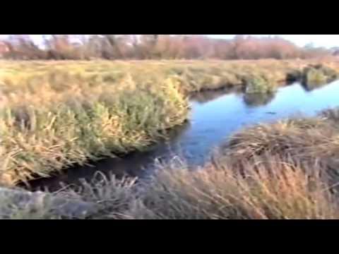 Go Fishing - John Wilson - Freshwater