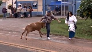 Crazy Billy Goat Attacks and Terrorizes The Street !!! :-)