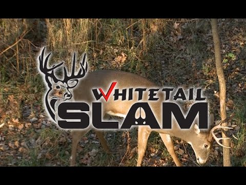 How To Identify, Hunt Whitetail Staging Areas