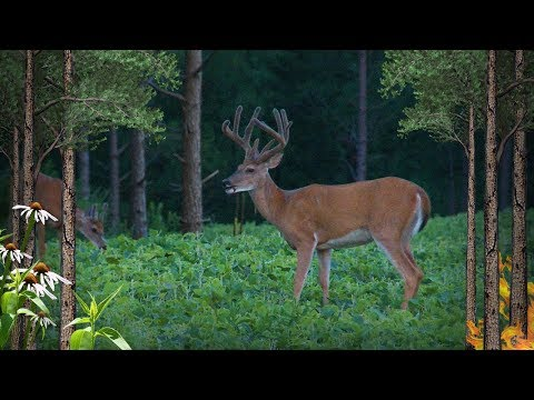 Over 40 Things To Do To Get Better Deer Hunting In Pines (#503)