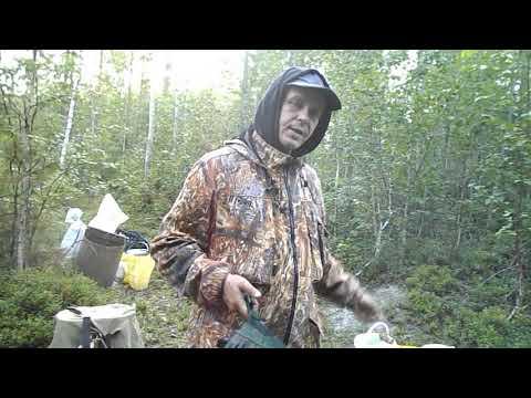 Вопрос: Где собирать голубику в Ленинградской области, когда?