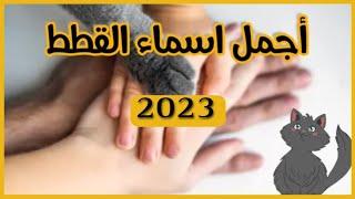 اسماء قطط ذكور واناث  حسب شكلها 2020