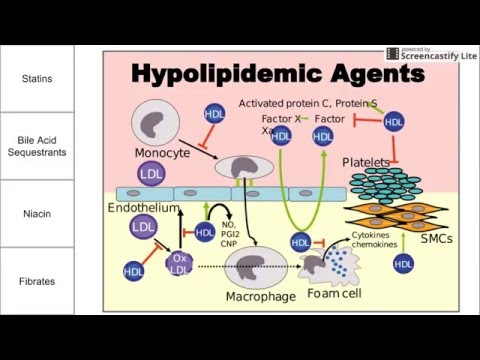 Hypolipidemic Agents