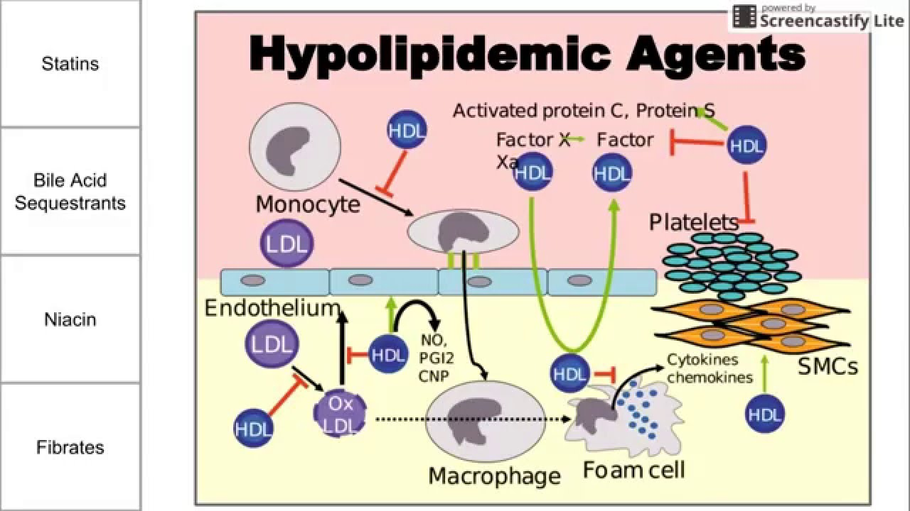 Hyperlipidemia, caused by a high-fat diet, aggressively accelerates organ rejection