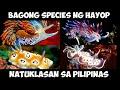 10 BAGONG NATUKLASAN NA SPECIES NG HAYOP SA PILIPINAS   Historya