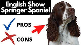 English Show Springer Spaniel Pros And Cons | The Good AND The Bad!!