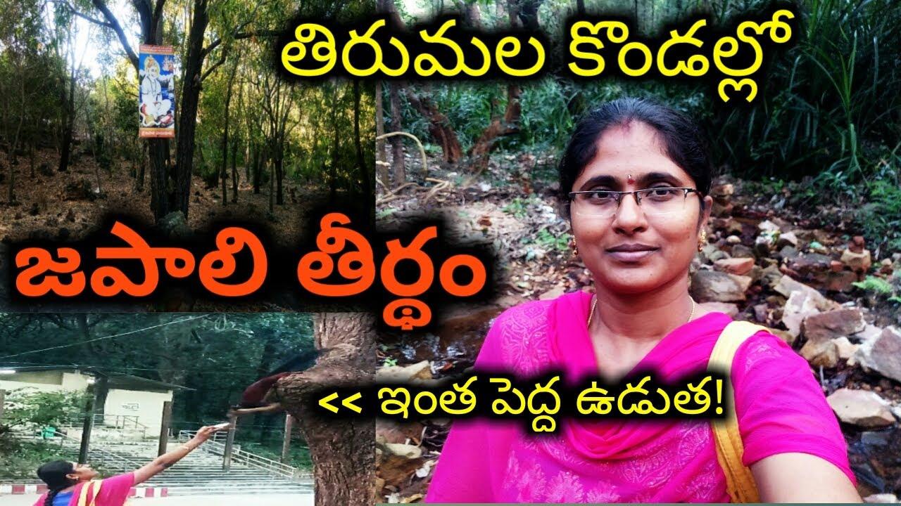 తిరుమల కొండల్లో జపాలి తీర్ధం || Anupama Thoughts