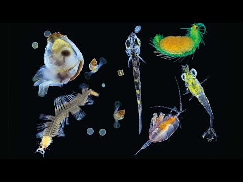 The science of oceans: measuring the effects of climate change on the world's plankton