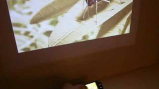 nokia n97 cell phone video output with aaxa p2 pico projector super cool