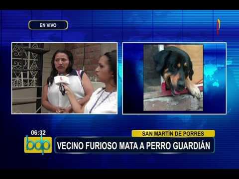 smp:-denuncian-que-hombre-asesinó-a-puñaladas-a-perro-guardián-(2/2)