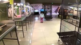 ТЦ ''Июнь'' выставка-зоопарк