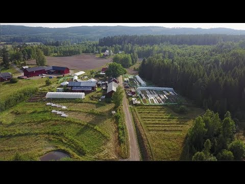 I'm in Sweden!   My first impressions at Ridgedale Farm
