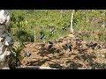 Mikat Burung Kacer Seru Banget Udah Kena Masih Gacor  Mp3 - Mp4 Download