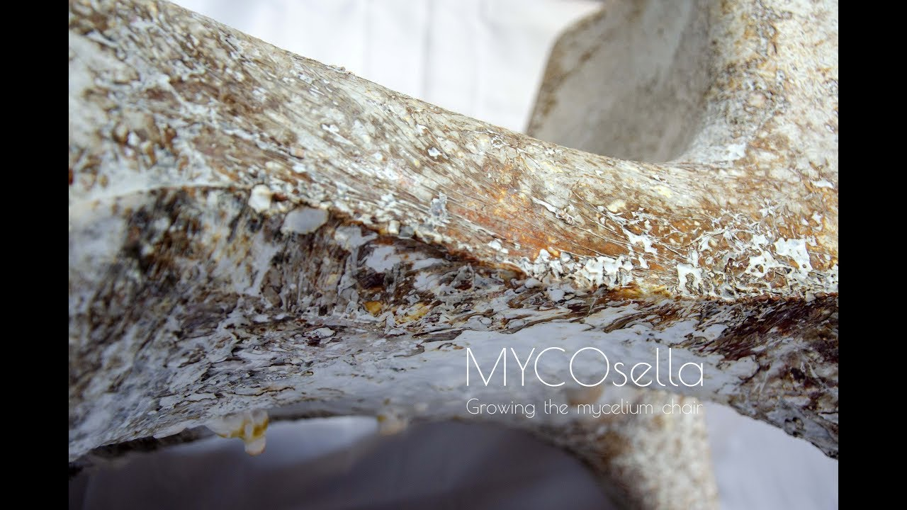 MYCOsella, Growing the Mycelium Chair - Time-Lapse Video