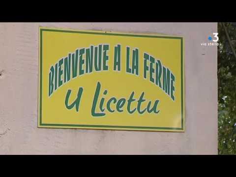 Justice : le procès de Joseph Leoni va s'ouvrir devant la cour d'Assises de Bastia