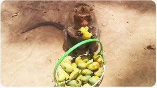 Monkey Loves Mango | Don