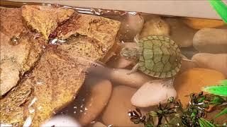 My Turtle Tank Setup