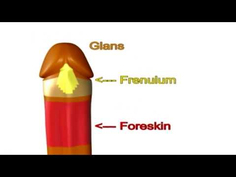 How Foreskin Moves
